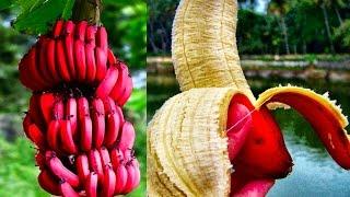 getlinkyoutube.com-15 World's Strangest Fruits