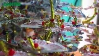 getlinkyoutube.com-Cây thần tài, cây tiền giấy đẹp - LH: 0986.162.352