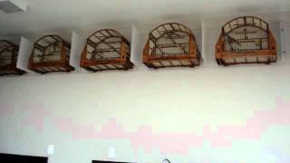 getlinkyoutube.com-Trinca ferro: 3notas, 4notas,5notas, grego mole(Monte Mor-Campinas)