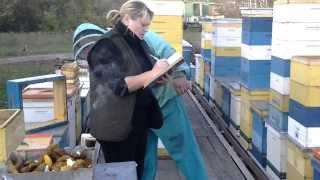 getlinkyoutube.com-Пчеловодство.ФОРМИРОВАНИЕ ГНЕЗДА В ЗИМУ 1 - 3