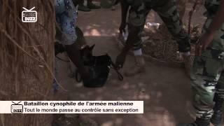 Bataillon cynophile de l'armée malienne en action
