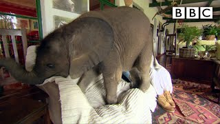 Baby elephant causes havoc at home - Nature's Miracle Orphans: Series 2 Episode 1 Preview - BBC One width=