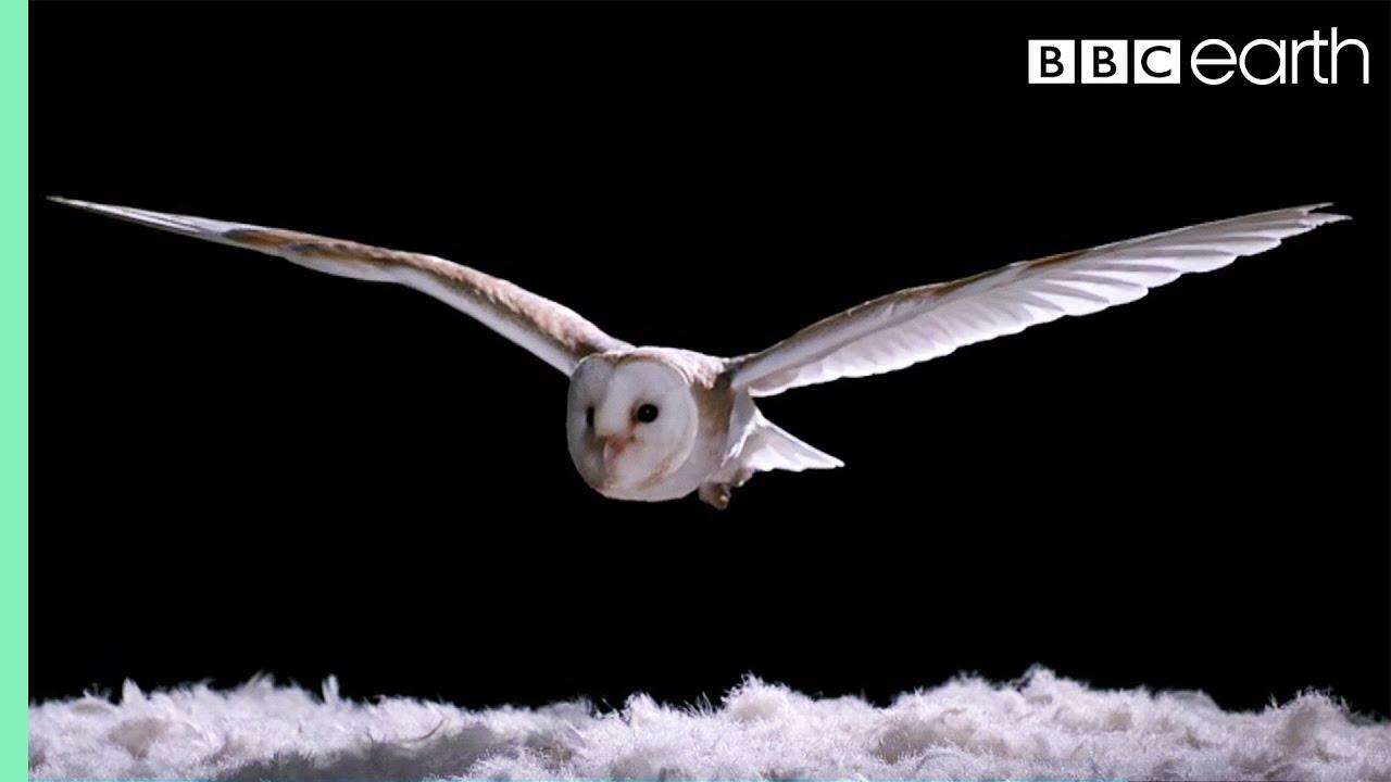 Hur tyst är en uggla när den flyger? Fram flyger ugglan, tyst ...