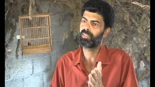 تربية الحسون في غزة - معاذ العامودي