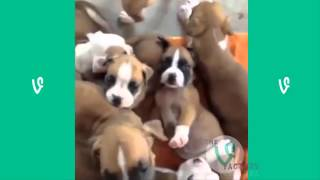 getlinkyoutube.com-The Best Cats and Dogs Vines ever !!!!!!