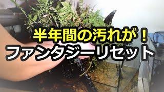 ファンタジーリセット【アクアリウム】お魚避難水槽へ!