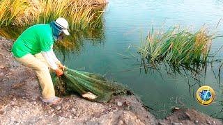 getlinkyoutube.com-Pescando Tilapias Grandes de laguna