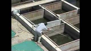 getlinkyoutube.com-Salton Sea Algal biomass production