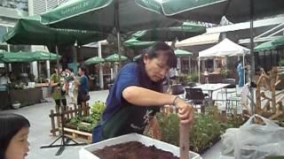 getlinkyoutube.com-วิธีการปลูกผักบุ้งอย่างง่าย
