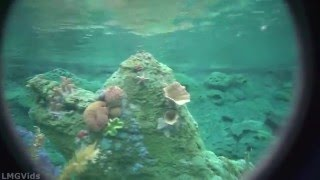 getlinkyoutube.com-[4K POV] Finding Nemo Submarine Voyage ride (Extreme Low Light) Disneyland ridethrough