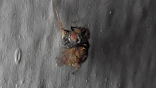 Fight For Life | Spider Kills/Fights Fly | Spider and Fly Fight | giant fly | Spider & Fly fight