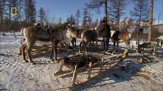 Russia - Wild Russia Siberia National Geographic Documentary HD