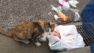 getlinkyoutube.com-【猫ハプニング】子猫が食べてはいけないものを...
