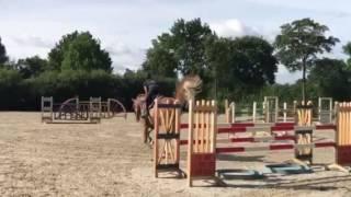Hilmar Meyer Sporthorses Oxigene home