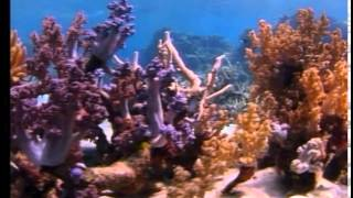 getlinkyoutube.com-Deep Sea Dive