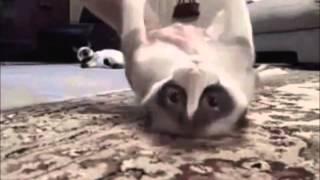 getlinkyoutube.com-Über 50 lustige Fail Katze Videos