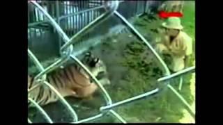 getlinkyoutube.com-Top 3 los peores ataques de animales a humanos