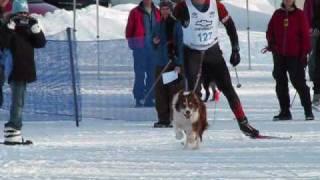 getlinkyoutube.com-Keweenaw Skijoring  Races Ski Dogs