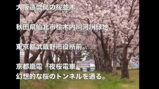getlinkyoutube.com-日本の魅力的な桜のトンネル、詩の世界のように美しい―中国メディア