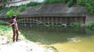getlinkyoutube.com-鯉のフライフィッシング/carp on the fly fishing!!(JVC GZ HD7)