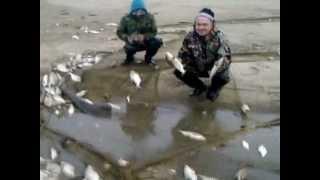 getlinkyoutube.com-на р.Чулым. Вот это рыба!!!!!!!