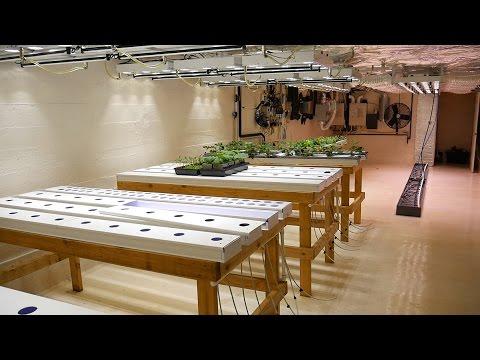Part 1 - Overview - Basement Hydroponic LED Garden Tour