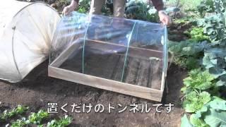 getlinkyoutube.com-菜園だより131221小トンネル・コマツナ移植
