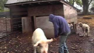 Small Farm Life