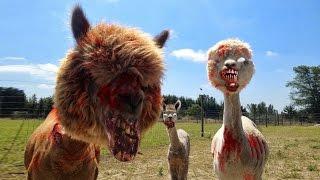 getlinkyoutube.com-왈도쿤' 동족을 잡아 먹는 알파카 - Alpaca Evolution