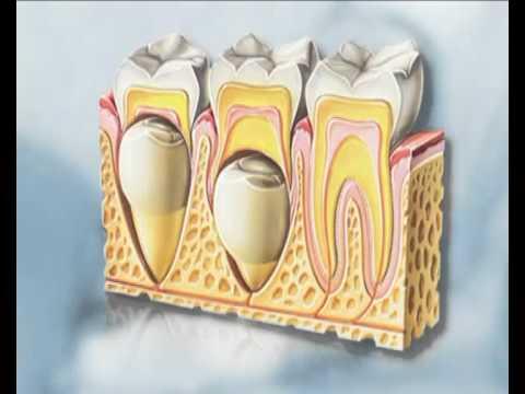 νεογιλά παιδικά δόντια και διατήρηση χώρου