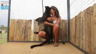 getlinkyoutube.com-La bellissima reazione di una pantera nera alla vista della volontaria