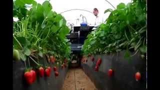 Фруктово-овощные комбайны.Комбайны будущего.Интересное видео.