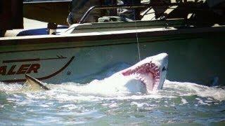 getlinkyoutube.com-BIG 9 Foot Sand Tiger Shark Caught in the Delaware Bay  - Shark Fishing 2011