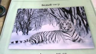 """getlinkyoutube.com-Вышивка бисером: обзор набора  """"Белый тигр"""" от """"Империя бисера"""""""