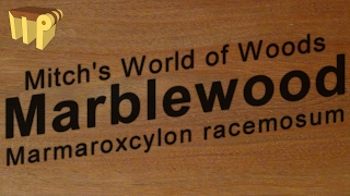 getlinkyoutube.com-MarbleWood (marmaroxylon racemosum) - Mitch's World of Woods