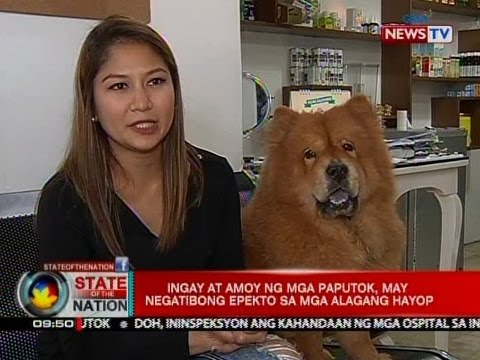 negatibong epekto ng tv sa kabataan Ang mga magulang na nanonood ng telebisyon sa kanilang mga anak nang  hindi  upang protektahan ang mga kabataan mula sa mga negatibong epekto  ng.