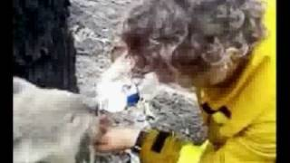 getlinkyoutube.com-Thirsty Koala - A Firefighter Gives Koala A Drink (2009 Australian Bushfires)