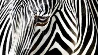 getlinkyoutube.com-The killers feat. Dj Tiesto - Mr. Brightside