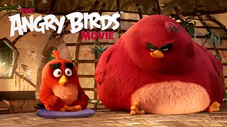 getlinkyoutube.com-The Angry Birds Movie - TV Spot: New Year's Resolutions