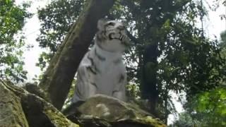 getlinkyoutube.com-Promo 7 Manusia Harimau