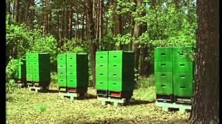getlinkyoutube.com-рработа с многокорпусен пчелен кошер Лангстрот-Рут