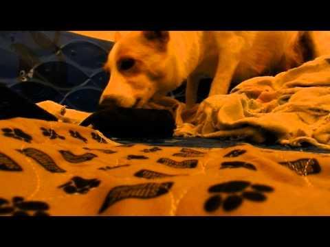 *Graphic* Carolina Dog Puppy Birth 10-5-14