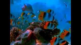 getlinkyoutube.com-Virtual Aquarium