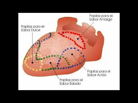 Malla Supralingual Adelgazante - DentoMedica 3C