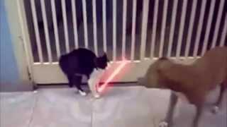 getlinkyoutube.com-videos de risa, Recopilación de gatos