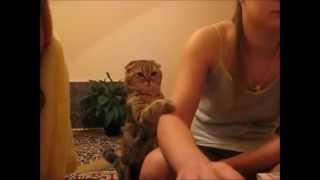 getlinkyoutube.com-Katze will gestreichelt werden