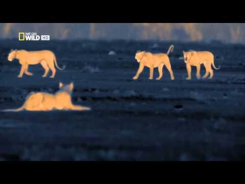 Caçadores noturnos leões HD Completo e dublado.