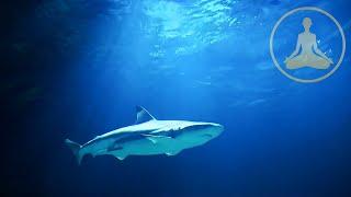 getlinkyoutube.com-Shark Meditation - HDTV - FULL HD 1080p