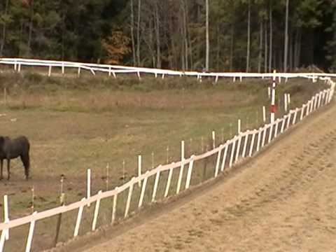Lovely Saratoga and Poetic Touch workout Oct 14 2010 Goodwin Farm.MOD