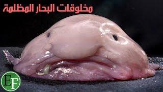 getlinkyoutube.com-عجائب مخلوقات الله في أعماق البحار المظلمة - القسم الاول